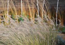 urządzanie ogrodów katowice - MUGO OGRODY KRZYSZTOF KRA... zdjęcie 3