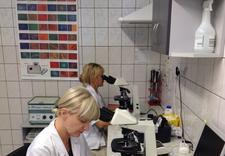 glukoza - NZOZ Laboratorium Analiz ... zdjęcie 11