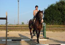 jazda konno - Ośrodek Jeździecki Faruk zdjęcie 11