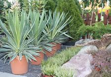 altany - Centrum Ogrodnicze BAOBAB... zdjęcie 8