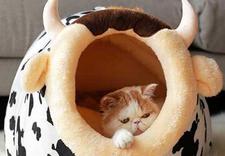 lokalizator dla kota - OFiuFiuPL zdjęcie 7