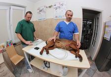 weterynarz - Klinika Weterynaryjna Kor... zdjęcie 9