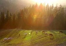 #AktywneLato - Górski Ośrodek Jeździecki... zdjęcie 8