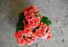 opryskiwacze ogrodnicze - Gospodarstwo Ogrodnicze I... zdjęcie 20