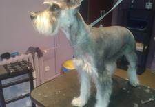 czyszczenie o - Doggy Style - Salon Strzy... zdjęcie 2