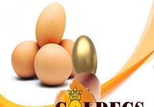 pasteryzowane białko - Goldegs. Hurtownia jaj zdjęcie 1