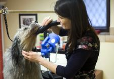 fryzjer dla psa kraków - URODA CZTEROŁAPA salon pi... zdjęcie 6