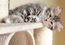 szampon dla kota - F.H.P.U Zooluz Dariusz De... zdjęcie 4