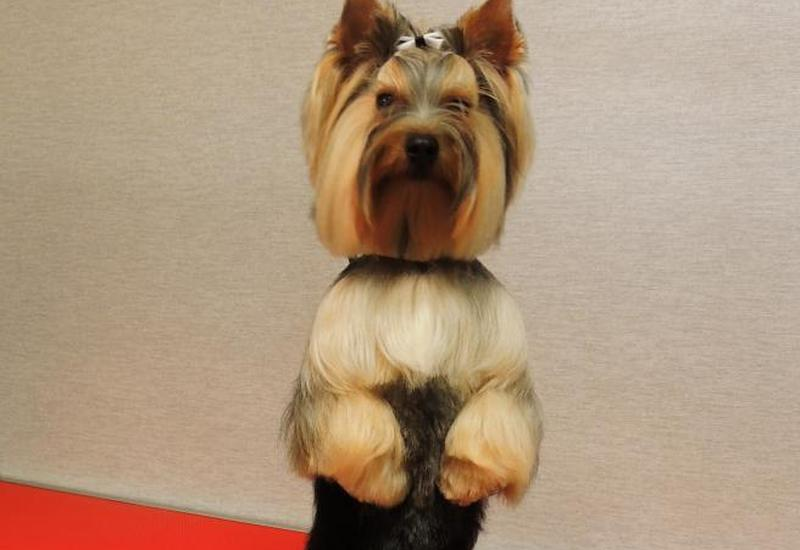 oczu - Salon Fryzjerski dla psów... zdjęcie 6