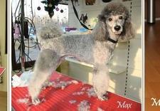 Strzyżenie psów, kąpiel dla psów, psi fryzjer