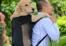 domek dla psa - OFiuFiuPL zdjęcie 15