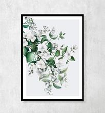 """Plakat botaniczny """"Jaśmin"""" A4"""