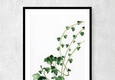 dekoracje - Ceci Bloom Anna Pleń zdjęcie 10
