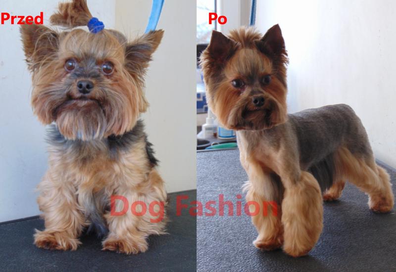 groomer - DOG FASHION Marta Bajczyk... zdjęcie 8