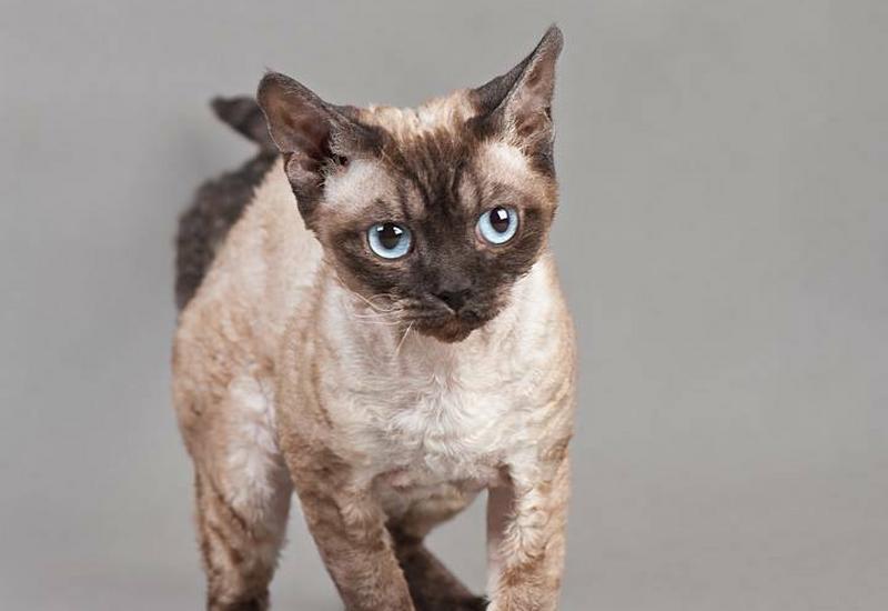 przysmaki dla kota - F.H.P.U Zooluz Dariusz De... zdjęcie 8