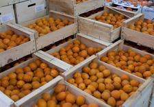 jabłka - Targpiast Sp. z o.o. zdjęcie 21