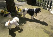 salon strzyżenia psów - Spa dla Psa - psi fryzjer... zdjęcie 4