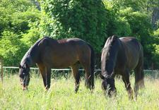 dla zaawansowanych - Ośrodek Jeździecki Faruk zdjęcie 9