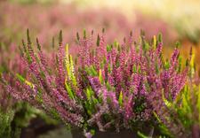 rośliny - Dolnośląskie Centrum Hurt... zdjęcie 8