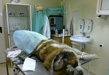 profilaktyka i leczenie - Specjalistyczny Gabinet W... zdjęcie 5