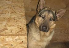 schronisko dla zwierząt - Schronisko Dla Bezdomnych... zdjęcie 1