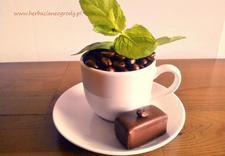 herbaciarnia