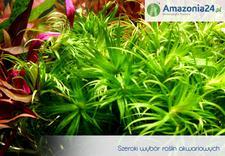 krewetki - Amazonia24.pl zdjęcie 4