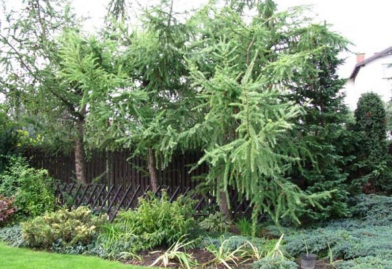 ogrodnicze usługi - AWR Ogrody Niebanalne - o... zdjęcie 7
