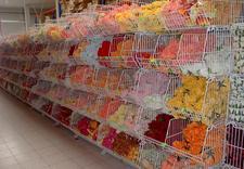 jarmuż - PPHU Florbank Agnieszka B... zdjęcie 4