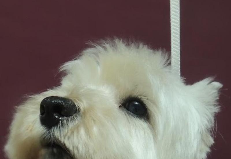 karmy dla psów - Salon Fryzjerski dla psów... zdjęcie 4