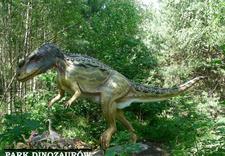 muzea minerałów - Park Dinozaurów. Leśna śc... zdjęcie 5