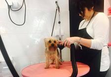 pielęgnacja psów warszawa - NEW JORK SALON PIELĘGNACJ... zdjęcie 15