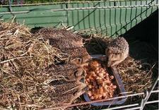 rehabilitacja zwierząt - Ośrodek Rehalbilitacji Zw... zdjęcie 3