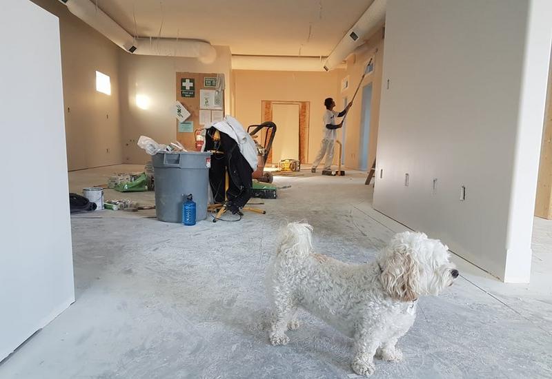 malowanie ścian - Expert Grzegorz Budny zdjęcie 4