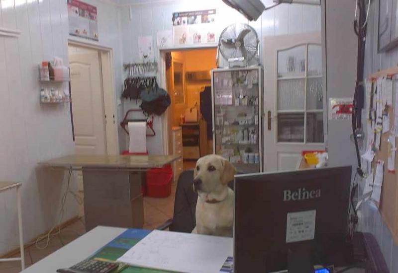 weterynarz dla kotów - Przychodnia Weterynaryjna... zdjęcie 1