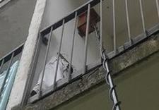 zabezpieczenie przed szkodnikami - One-Trap. Deratyzacja, de... zdjęcie 10