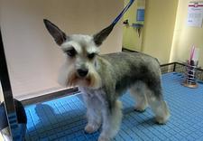 hotel dla psów - Spa dla Psa - psi fryzjer... zdjęcie 13