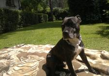 obcinanie pazurów - Spa dla Psa - psi fryzjer... zdjęcie 9