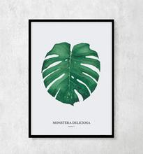 "Plakat botaniczny ""Monstera Deliciosa"" A4"