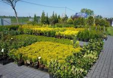 lawety - Centrum Ogrodnicze Aronia zdjęcie 11