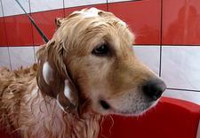salon dla psów - Salon dla Psów i Kotów Cz... zdjęcie 2