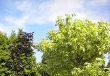 szkółka roślin śląskie - Szkółka Drzew i Krzewów O... zdjęcie 5