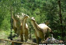 spotkania integracyjne - Park Dinozaurów. Leśna śc... zdjęcie 7