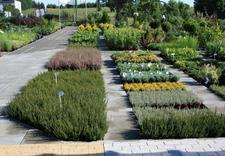 donice - Centrum Ogrodnicze BAOBAB... zdjęcie 6
