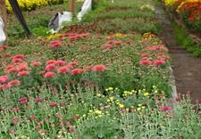 nożyce do trawy - Gospodarstwo Ogrodnicze I... zdjęcie 13