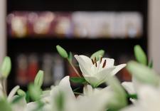 Etat Libre - Lulua. Perfumeria i sklep... zdjęcie 11