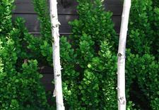 zakładanie ogrodów katowice - MUGO OGRODY KRZYSZTOF KRA... zdjęcie 4