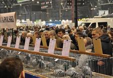 targi - Expo Silesia Sp. z o.o. C... zdjęcie 5