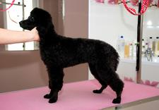 pielęgnacja psów