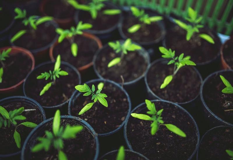 produkcja podłoży ogrodniczych - NATURA II Wojda Rafał zdjęcie 1